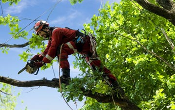 find trusted rated Ely tree surgeons