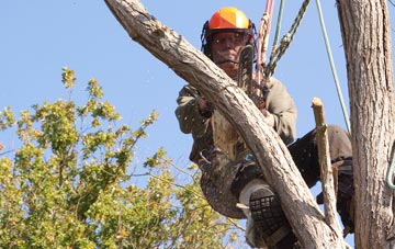 finding qualified Ely tree surgeons