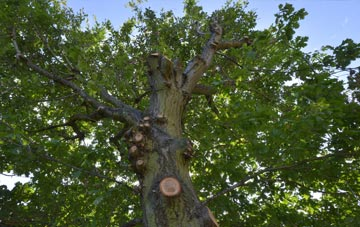 what is Ely tree surgery?