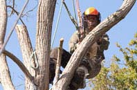 Ely tree surgeon services